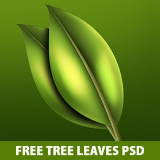 Free Tree Leaves PSD